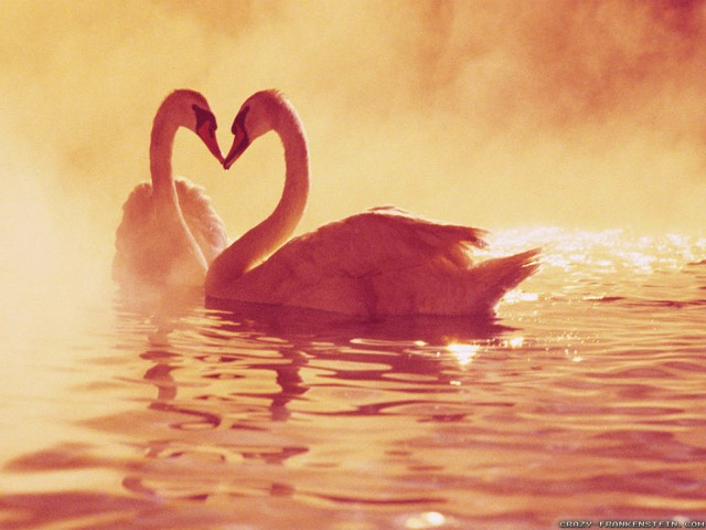 swans-love-art-wallpapers-1600x1200