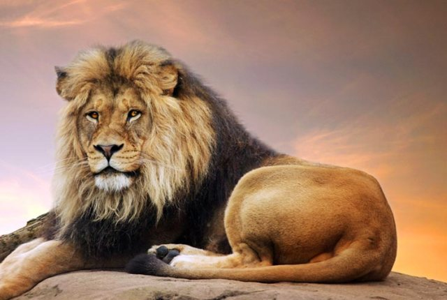 The-Lustful-Lion-8-Things-to-Know-About-Dating-a-Leo-Man-MainPhoto.jpg